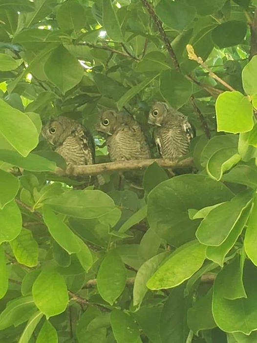 фото, птицы