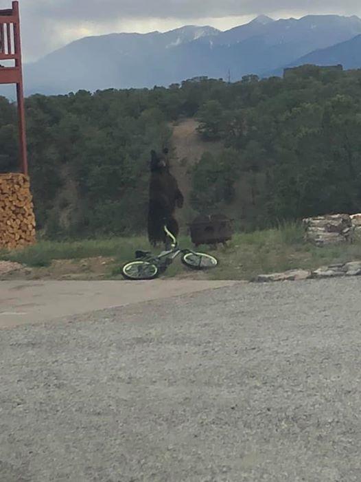 фото, медведь