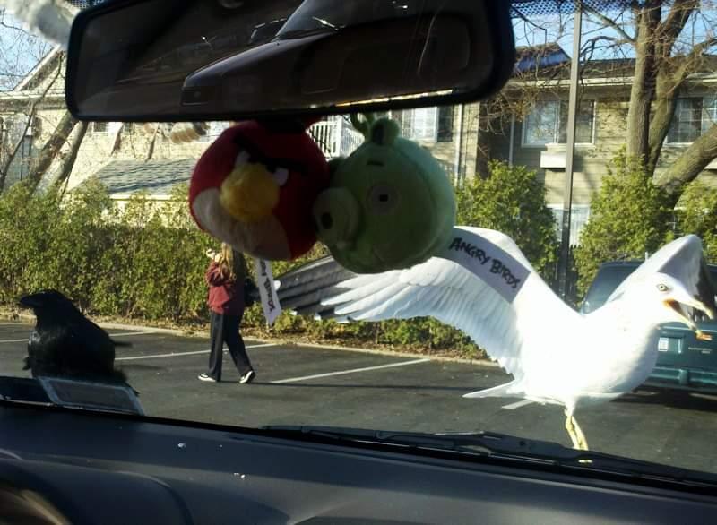 птица, фото