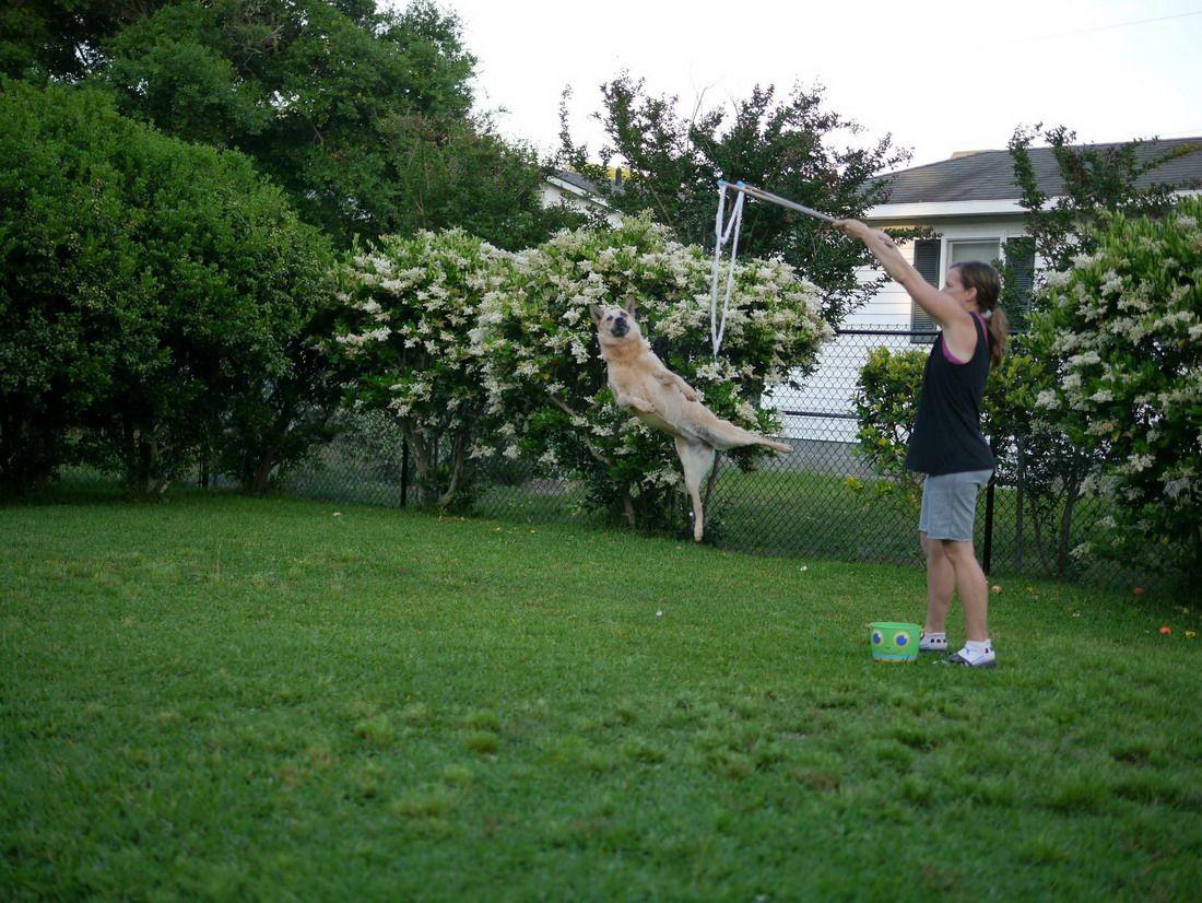 собака, женщина, дрессировка