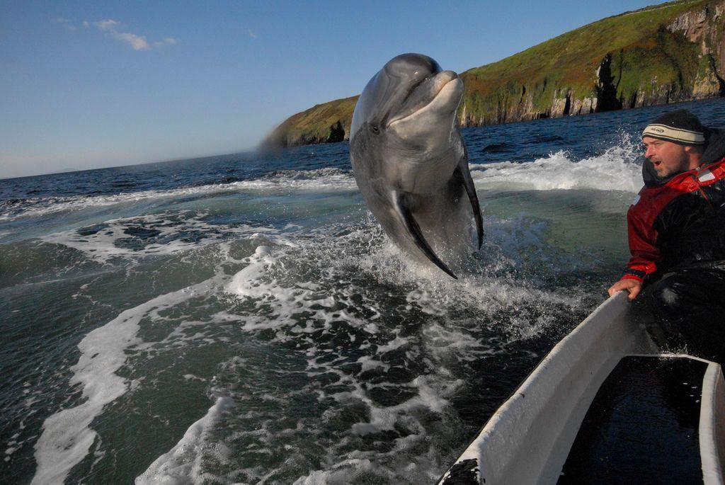 дельфин, человек, встреча