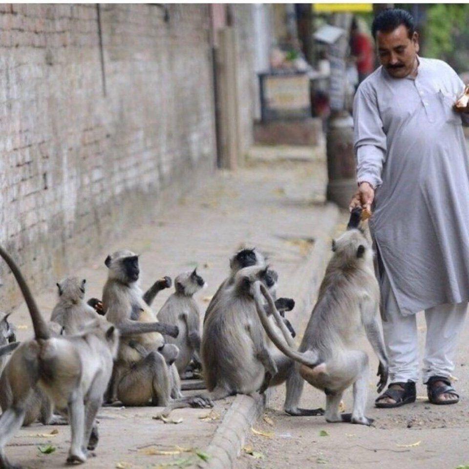 обезьяны, Индия