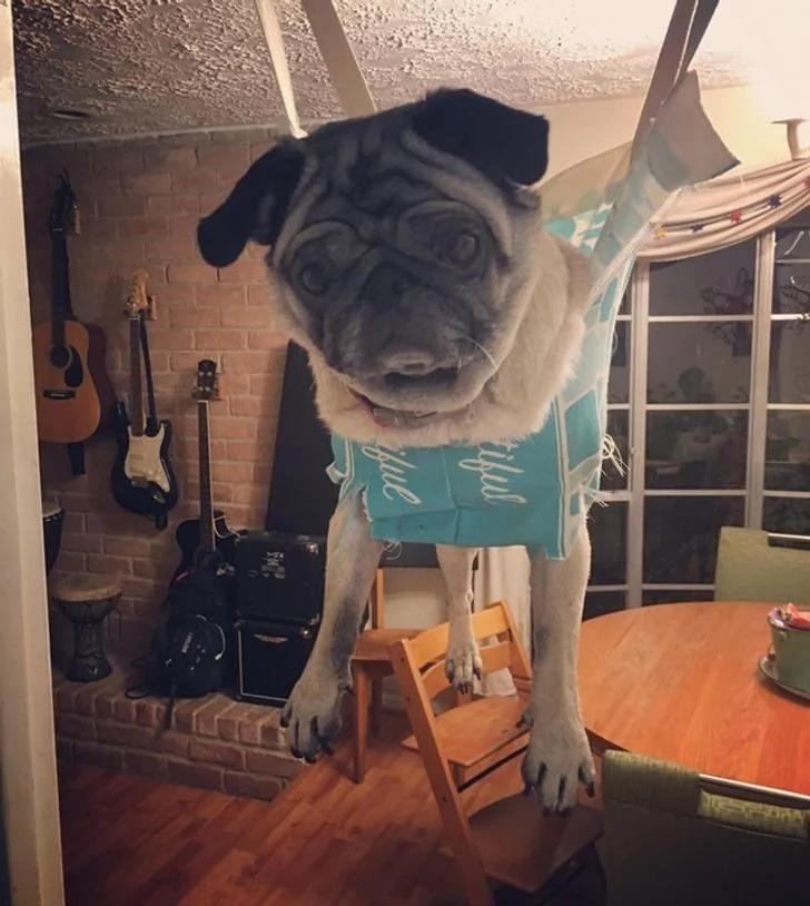собака, лайфхак
