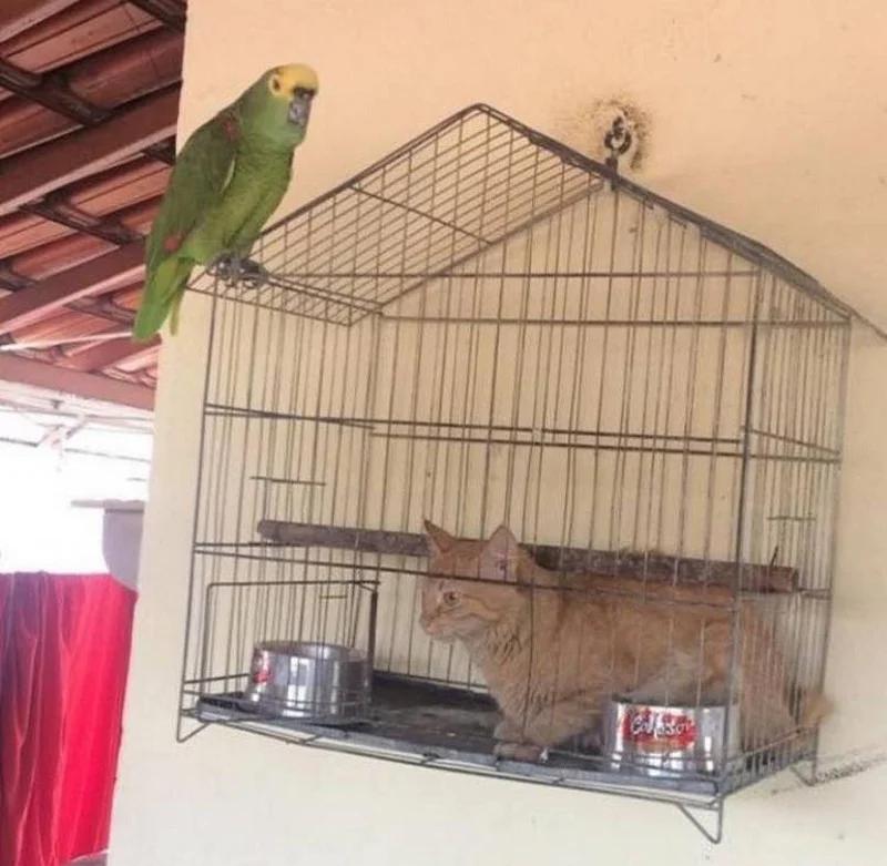 клетка, кот, попугай