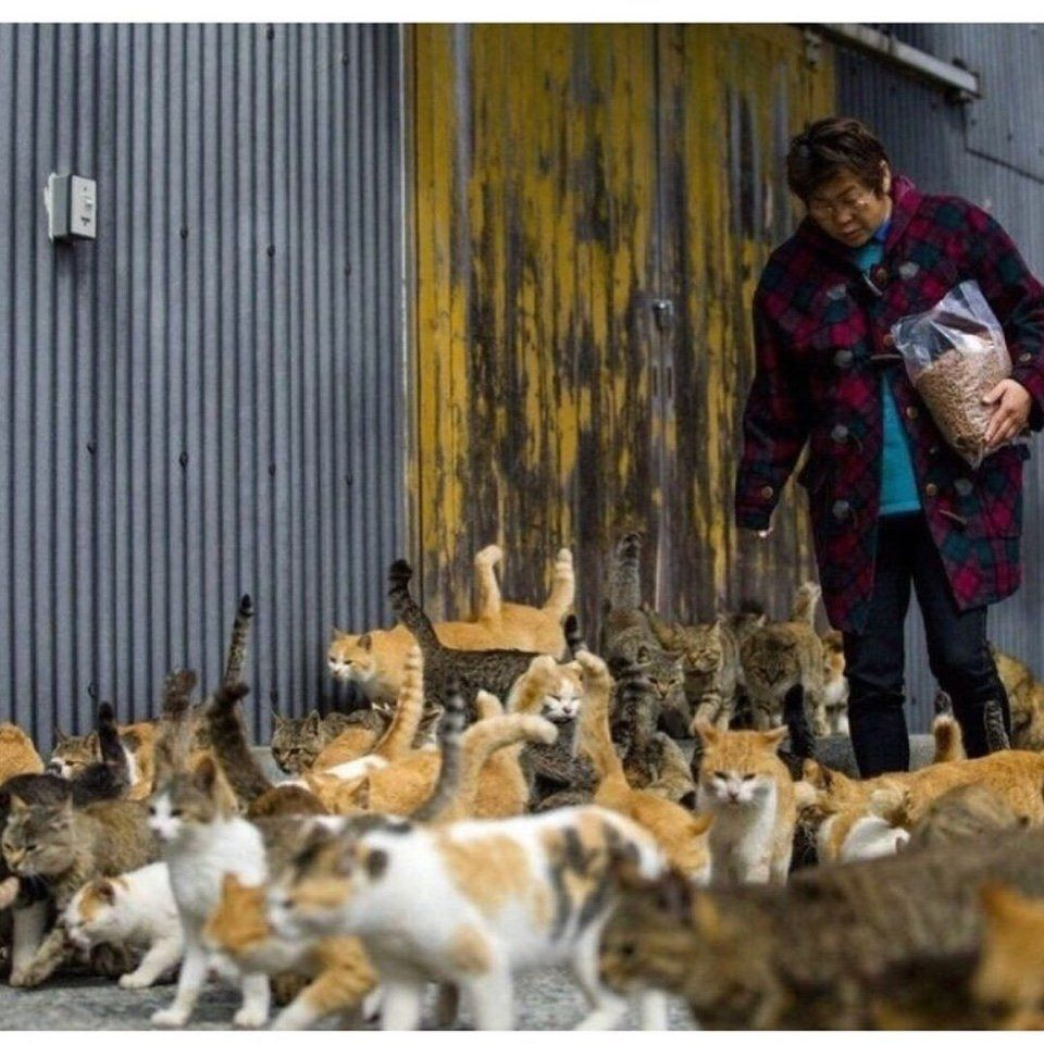 кошки, Япония