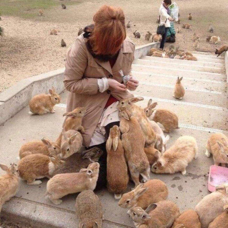кролики, Япония