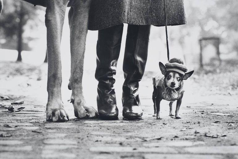 ноги, собака, женщина, сапоги