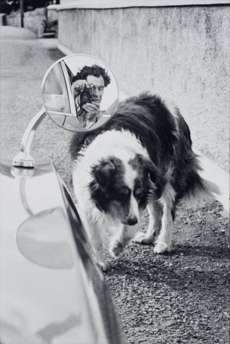 фотограф, собака