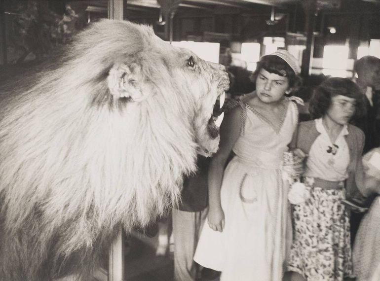 лев, зрители
