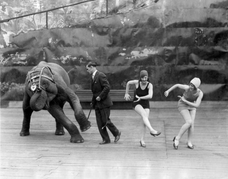Танцы со слоном / Фото: ©mixnews.lv
