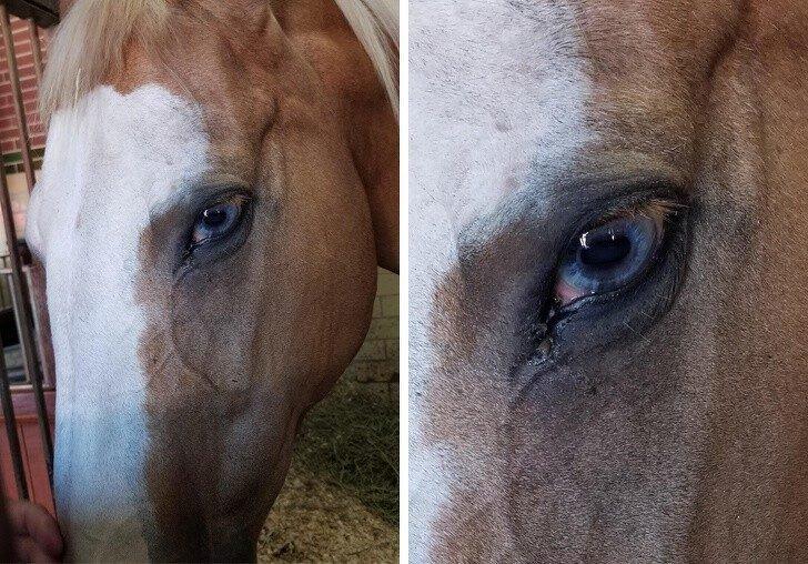 лошадь, глаза