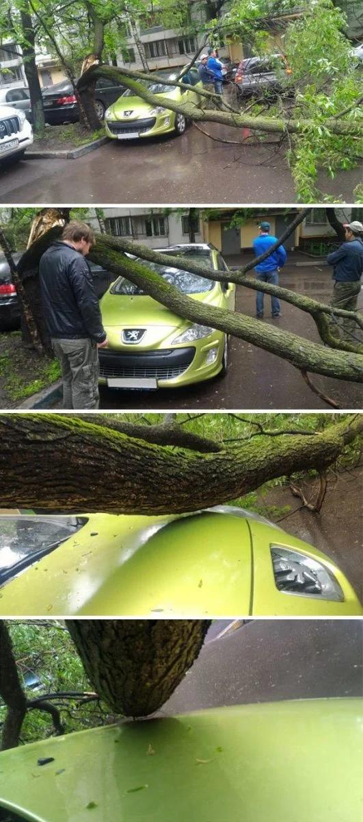 автомобиль, дерево