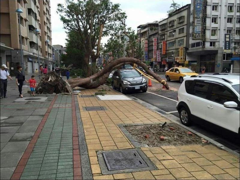 удача, автомобиль, дерево