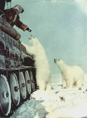 Танкисты кормят белых медведей / Фото: ©masterok.livejournal.com