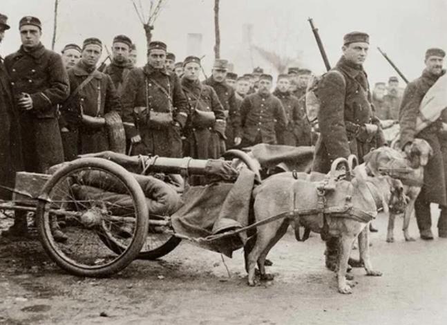 Военные собаки, перевозящие пушки / Фото: ©masterok.livejournal.com