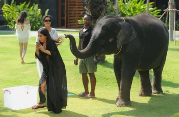 слон, Кардашьян