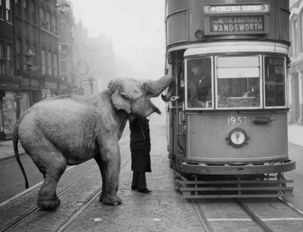 слон, трамвай