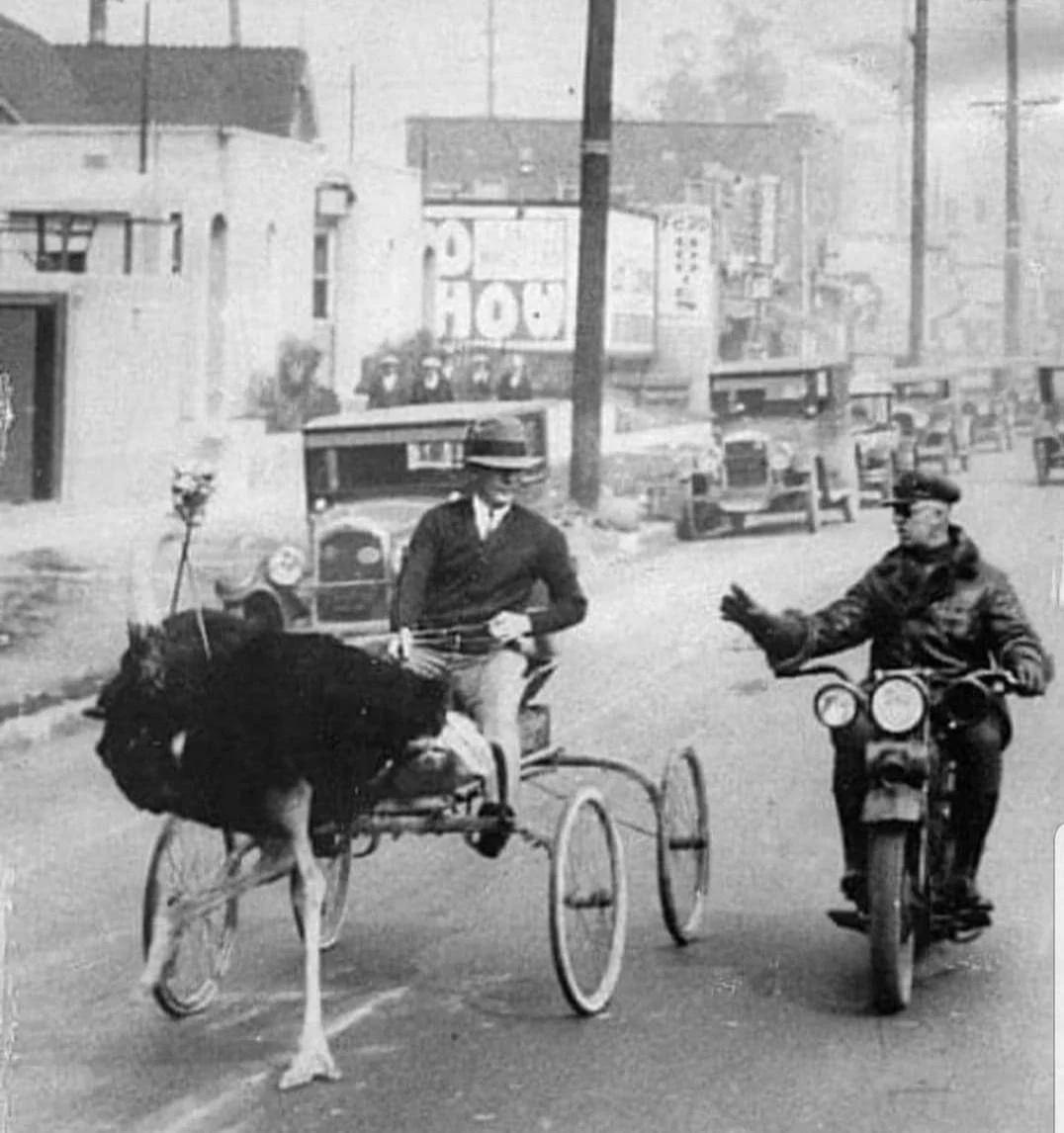 город, повозка, страус, мотоцикл