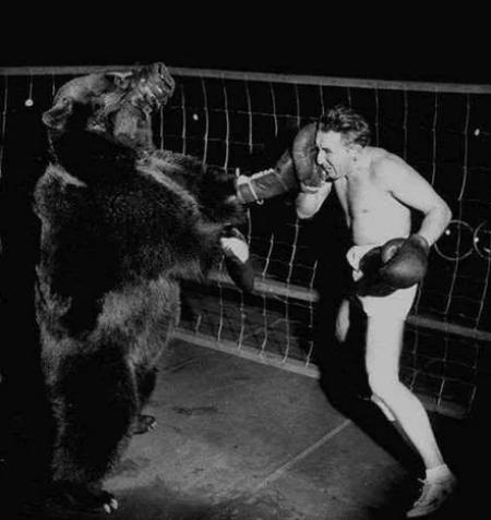 Боксерский поединок между американским боксёром Гусом Вальдорфом и настоящим медведем, март 1949 год