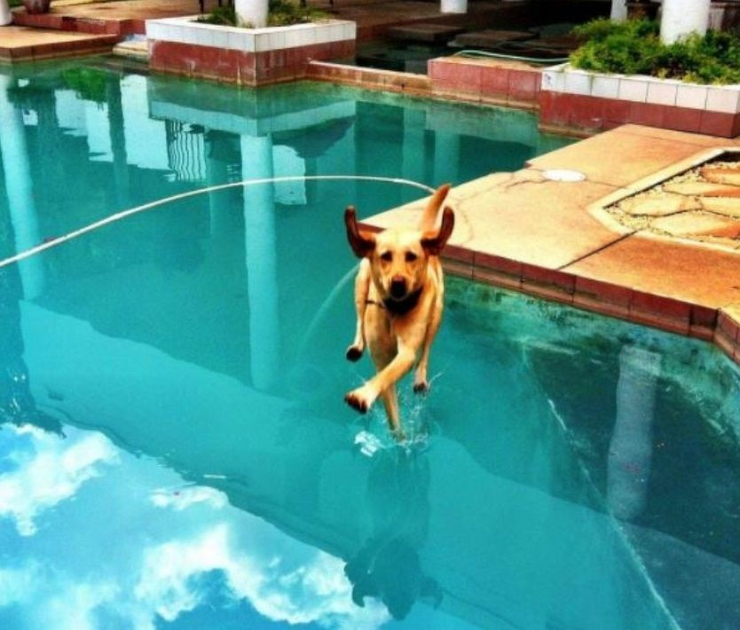 Собака вне законов тяготения \ Фото: ©smekhdosloz.ru