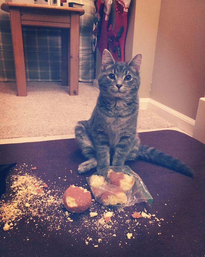 кот, пирожные
