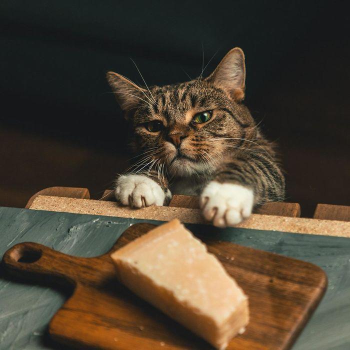 кот, пирог