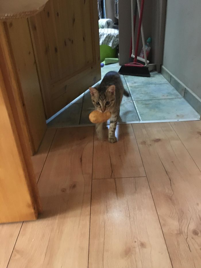 кот, картошка