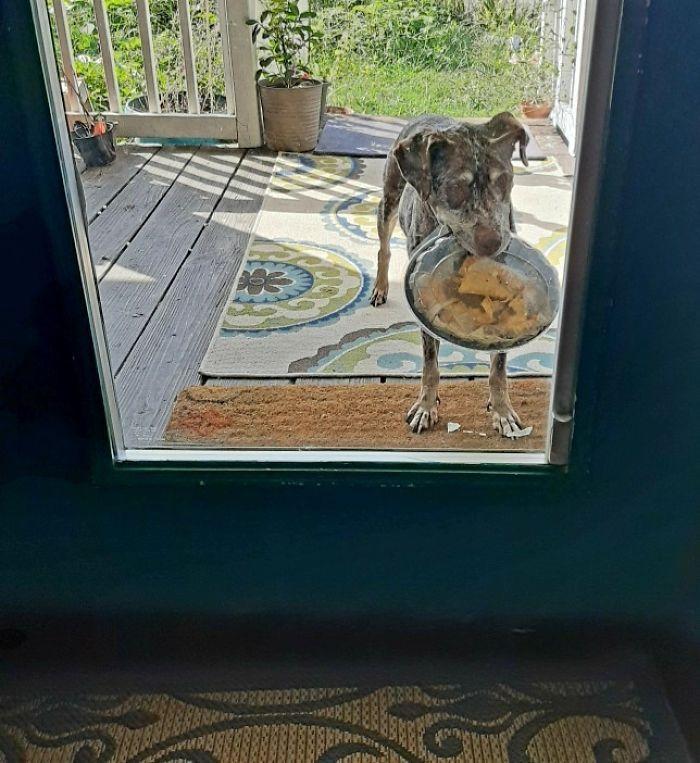собака, пирог