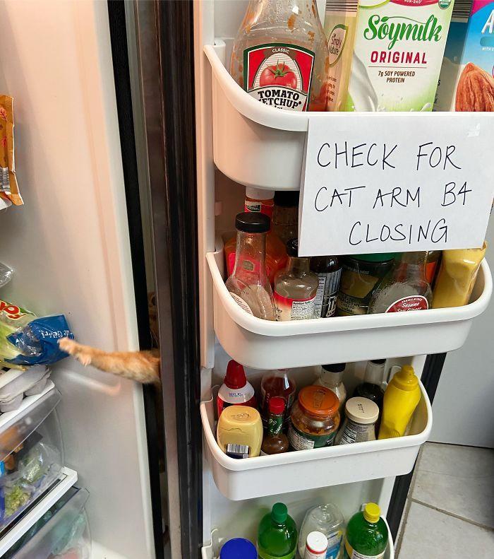 холодильник, кот, лапа