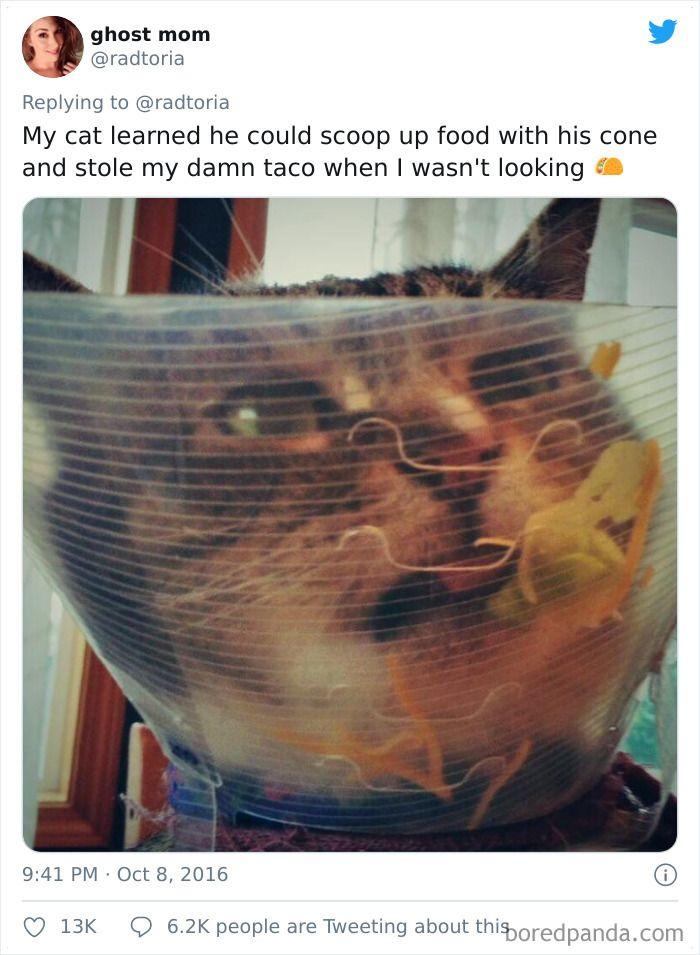 кот, пакет