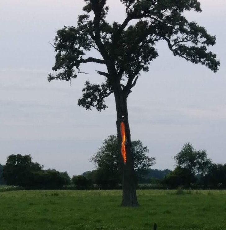 молния, дерево