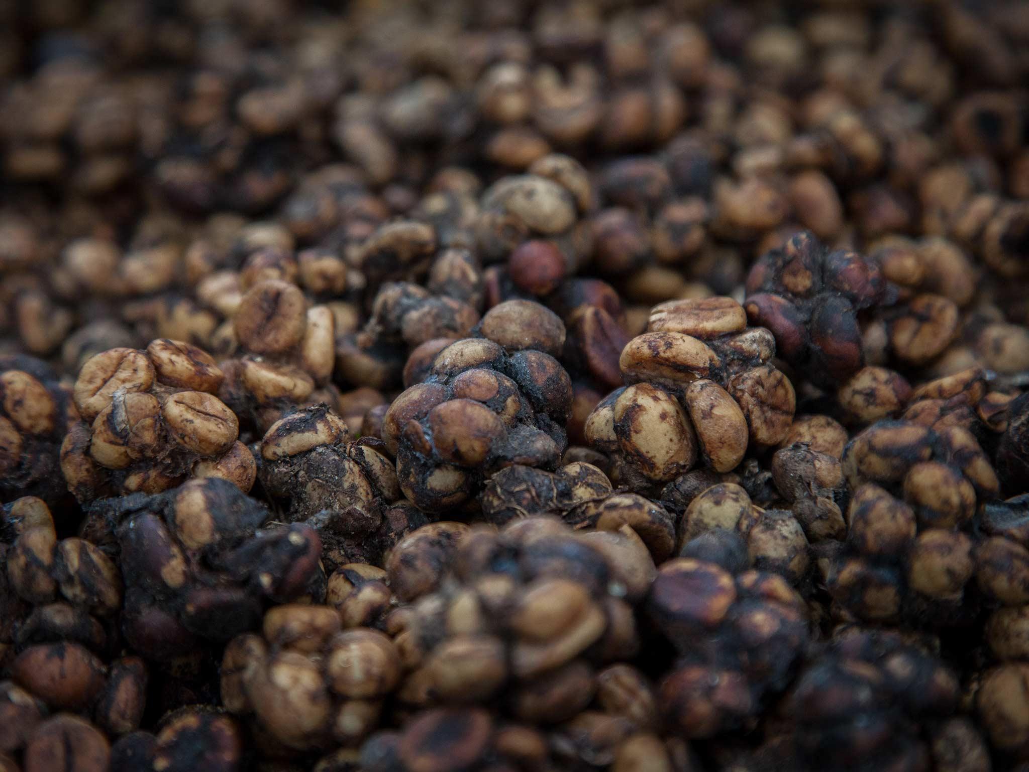 кофе, кал
