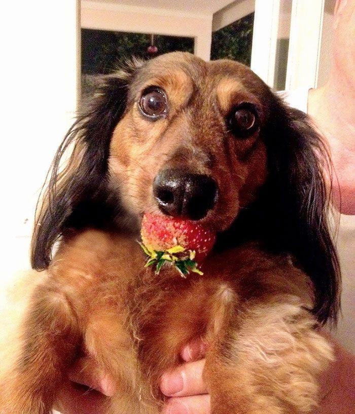 собака. клубника