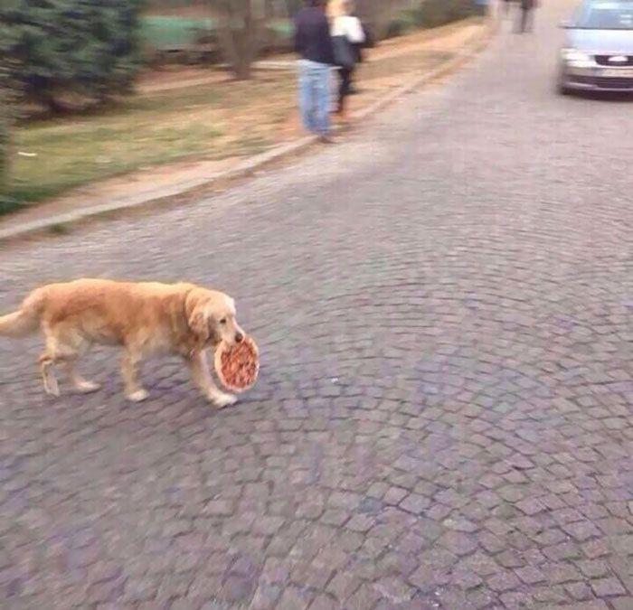 собака, пицца