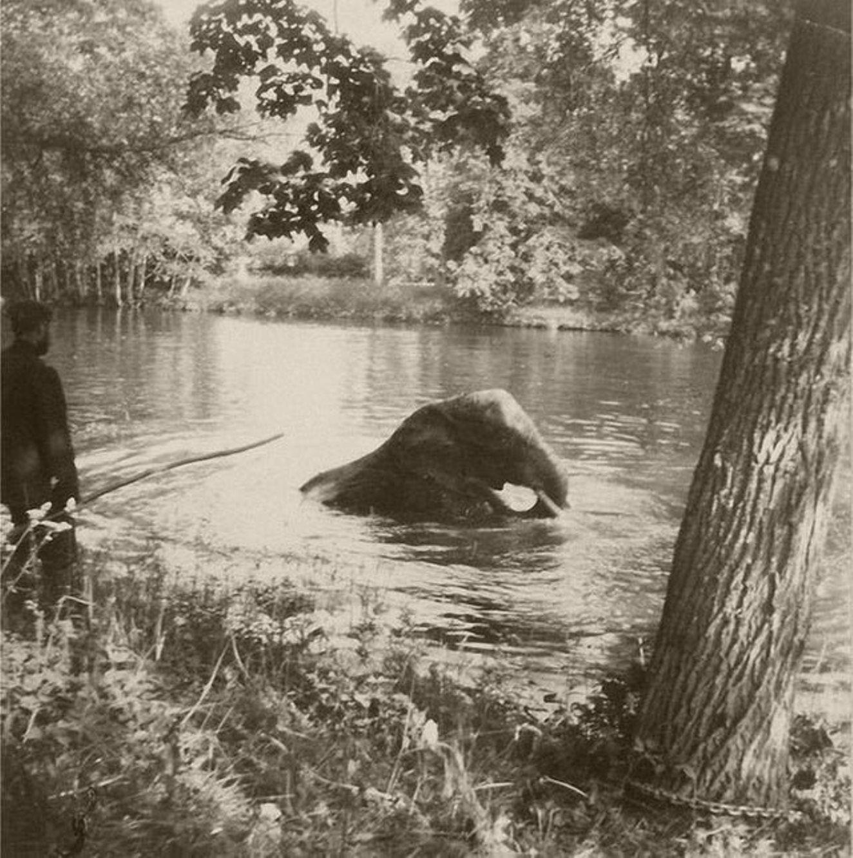 Николай Второй и слон