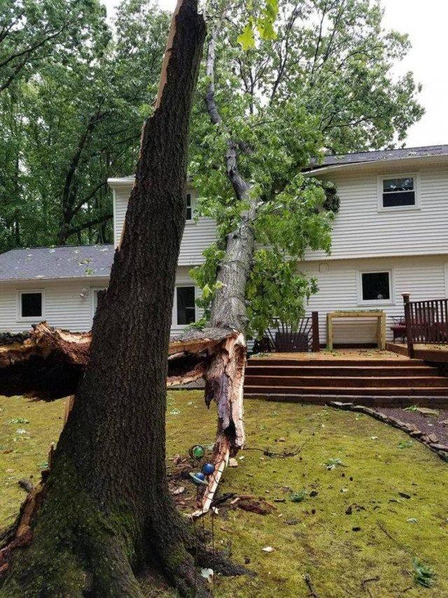 дерево свалилось на крышу дома