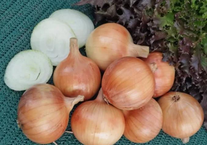 лук, овощ, молодость
