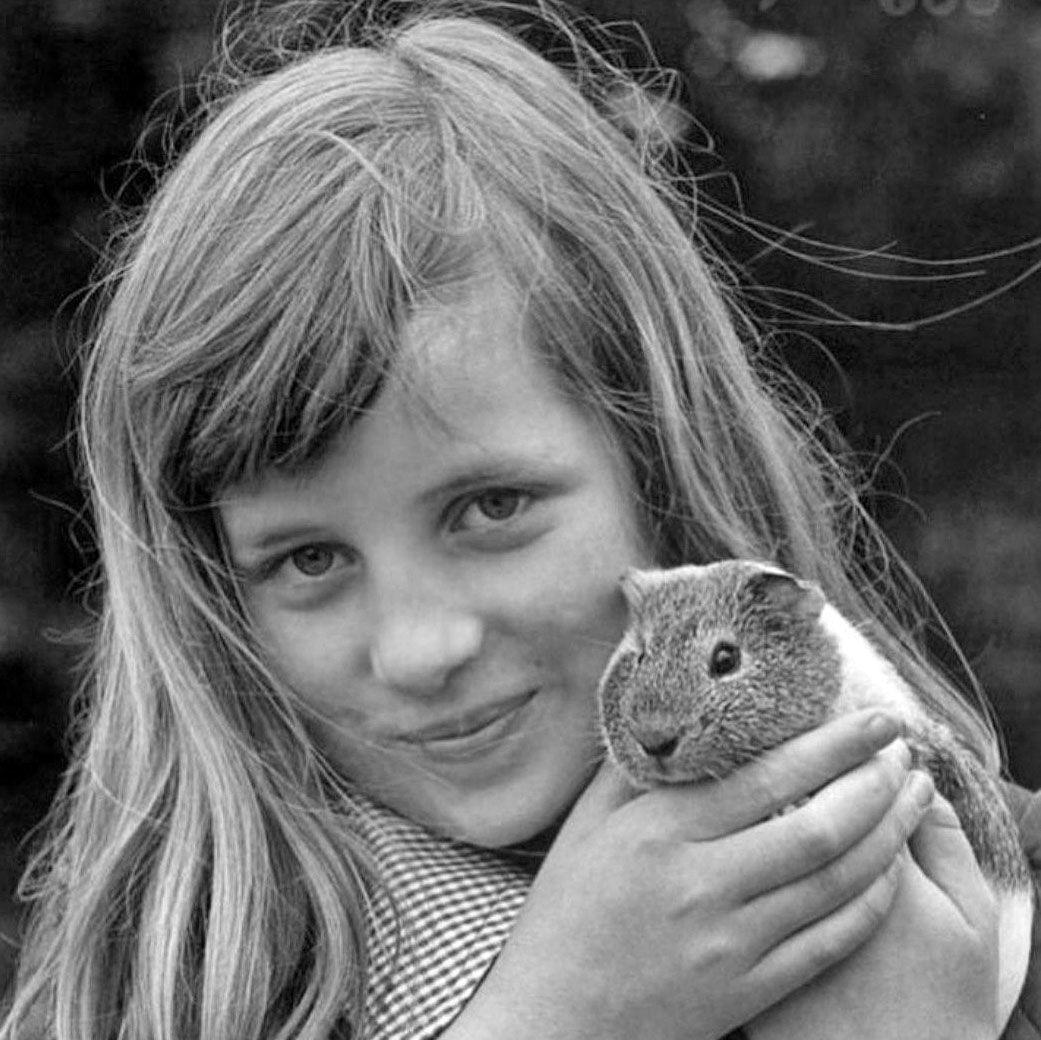 Диана, кролик, принцесса