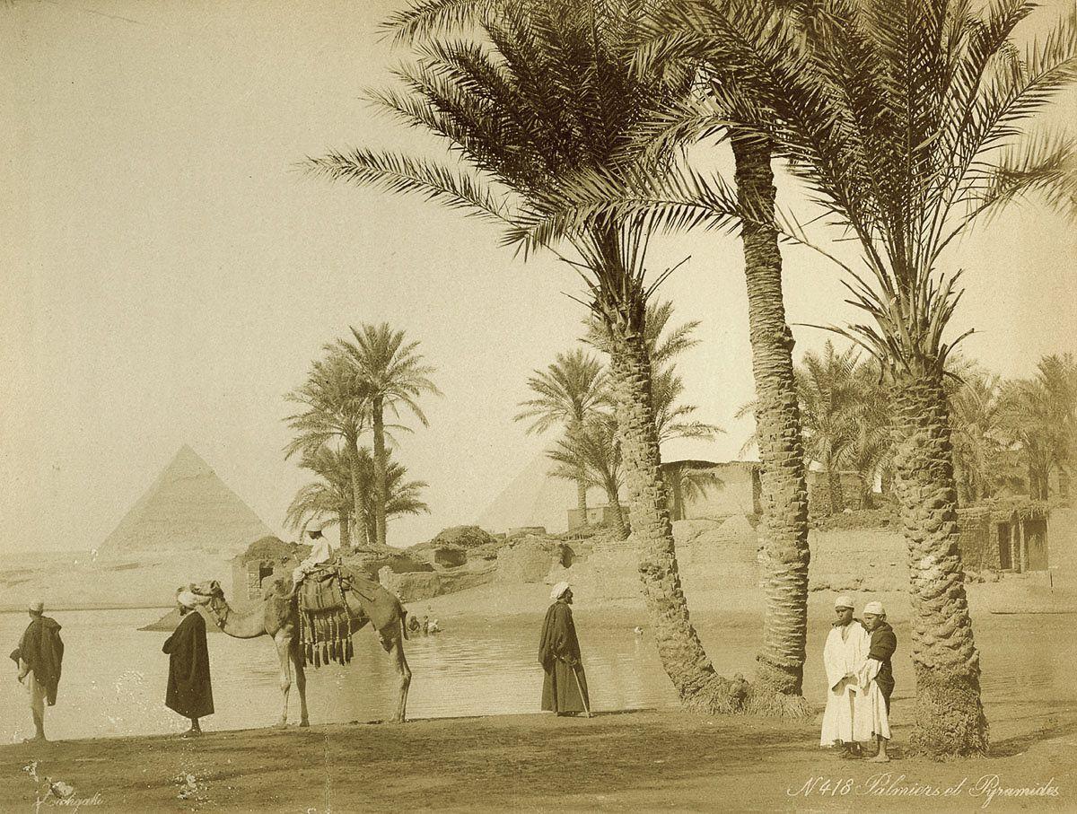 пальмы, пирамиды, люди