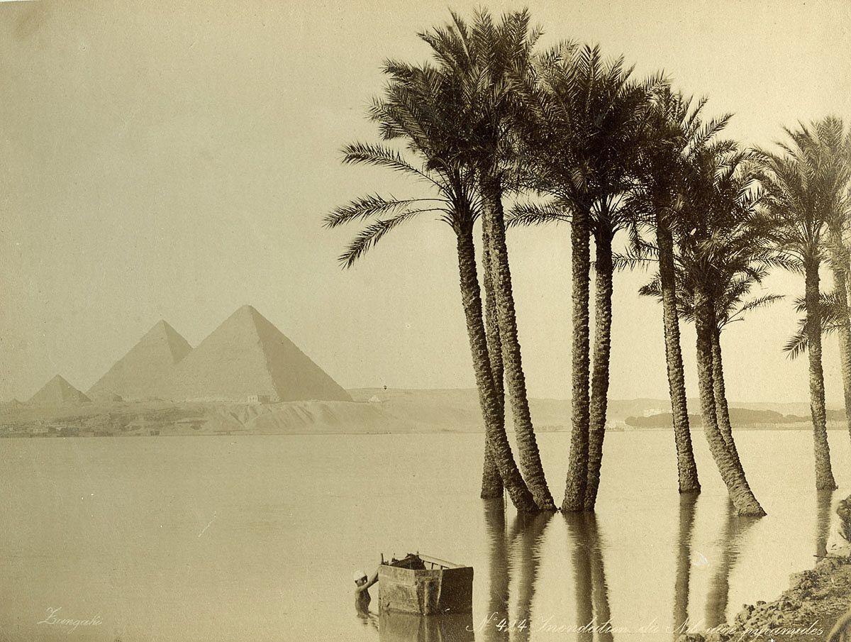пирамида, пальмы