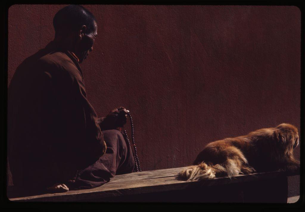 медитация, собака