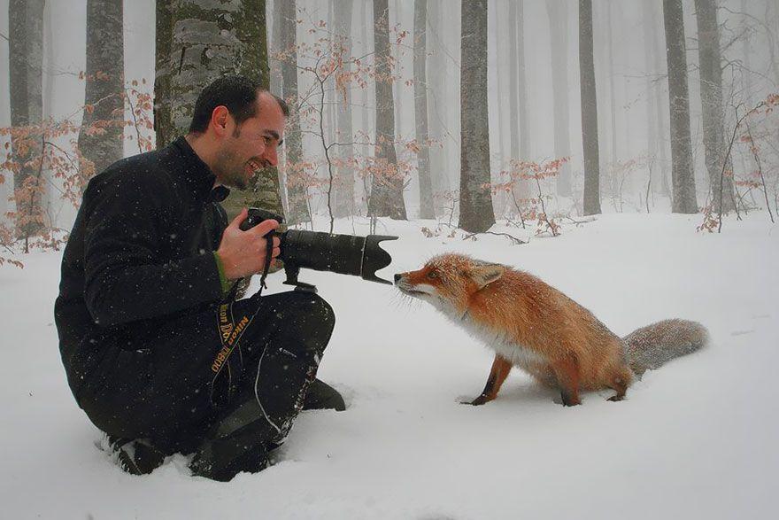 лиса, фотограф, кадр