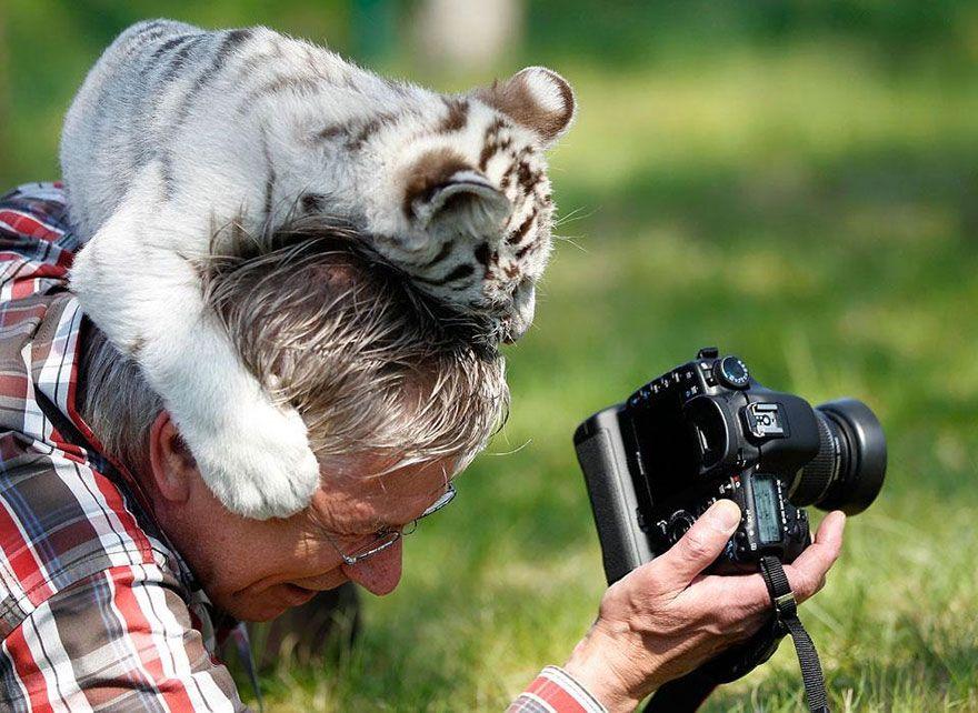 фотограф, зверь