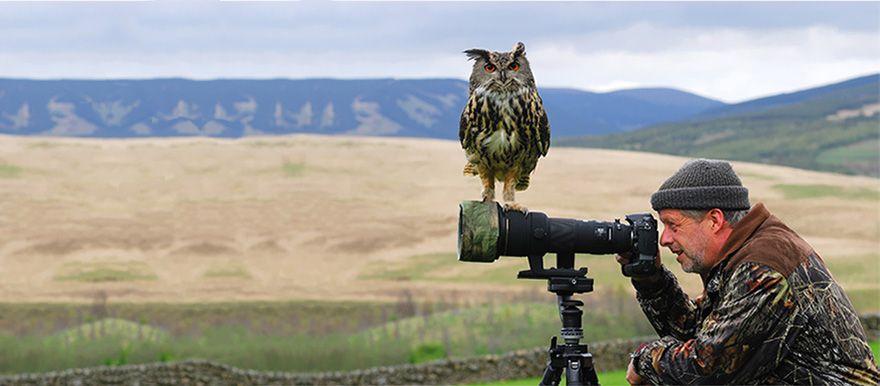 сова, фотограф