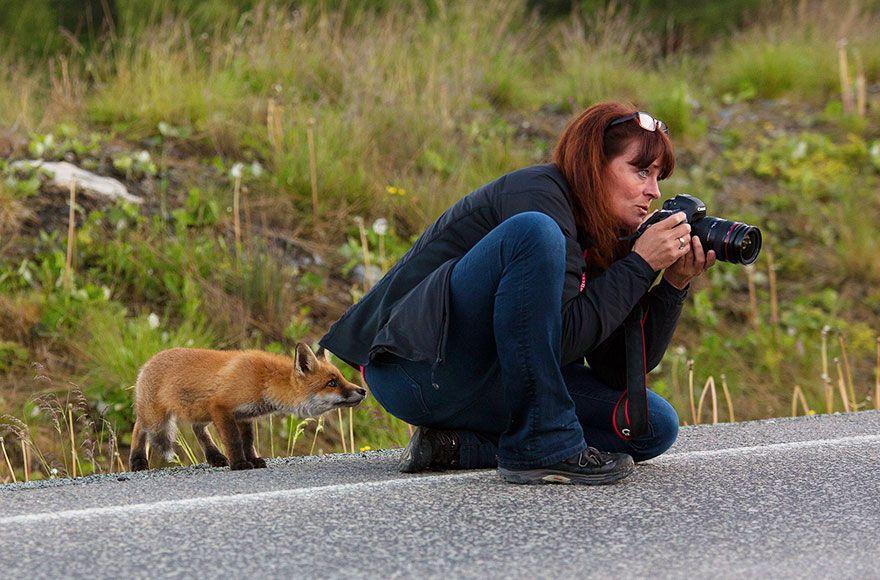 фотограф, лиса