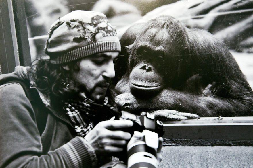 примат, обезьяна, фотограф