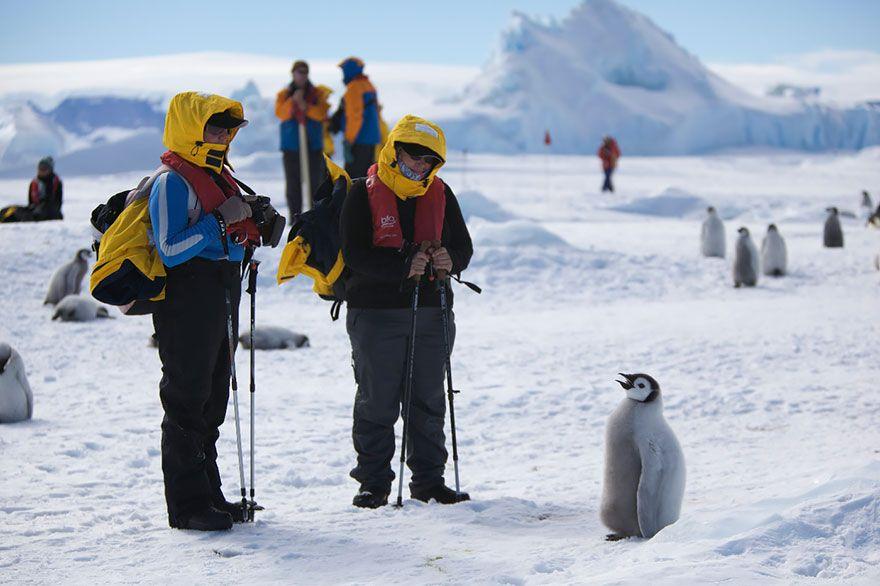 пингвин, фотограф