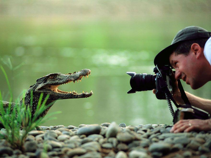 крокодил, фотограф