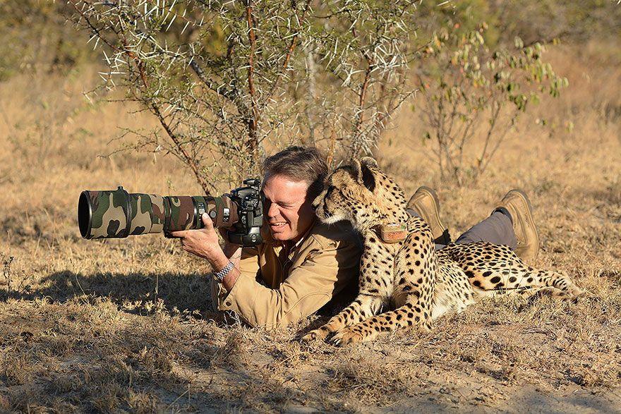 фотограф, гепард