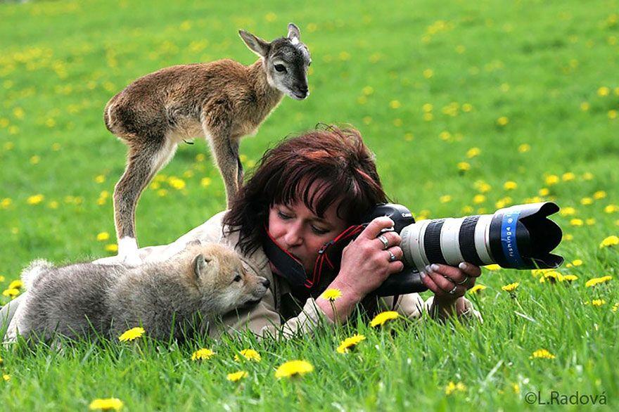фотограф, животные